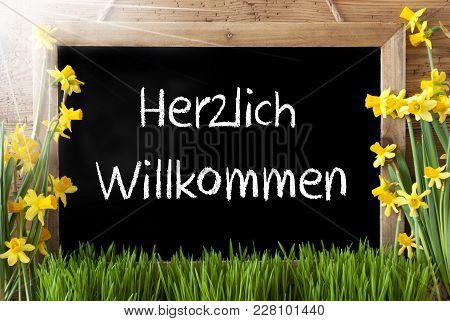 Blackboard With German Text Herzlich Willkommen Means Welcome. Sunny Spring Flowers Nacissus Or Daff