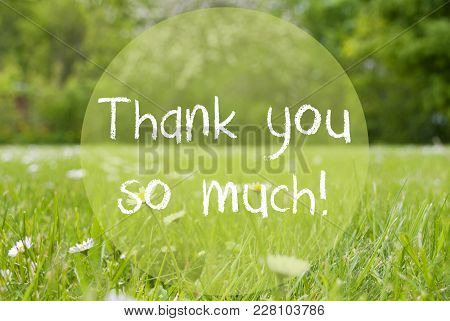 English Text Thank You So Much. Spring Or Summer Gras Meadow With Daisy Flowers. Blurry Trees As Bac