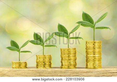 Investment, Money, Interest And Financial Concept. Gold Coin On Wood Counter With Gorwing Tree On Bo