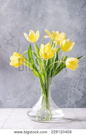 Bouquet Of Yellow Tulips With Leaves In Glass Vase Over Grey Texture Background. Still Life. Spring