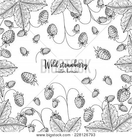 Hand Drawn Illustration Of Wild Strawberry Isolated On White Background. Berries Engraved Style Illu