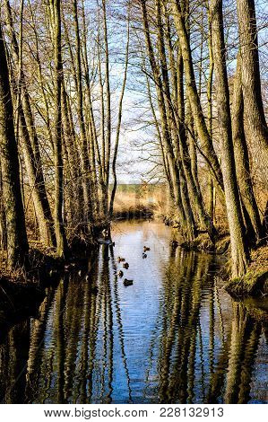 Beautiful Reflection On Brook With Ducks Beaneath Trees In Forest At The Edge Of Prague