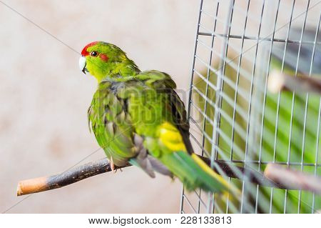 Motley Parrot Flew Out Of The Cage And Enjoys Freedom
