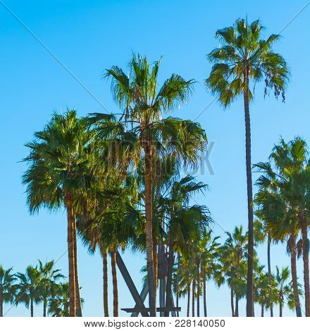 Palm Trees In Los Angeles In California