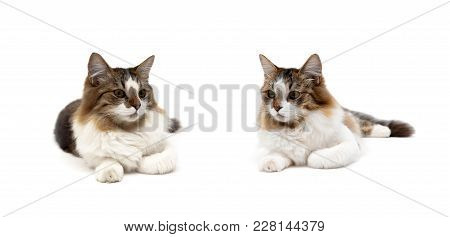 Fluffy Cat Lies On A White Background. Horizontal Photo.
