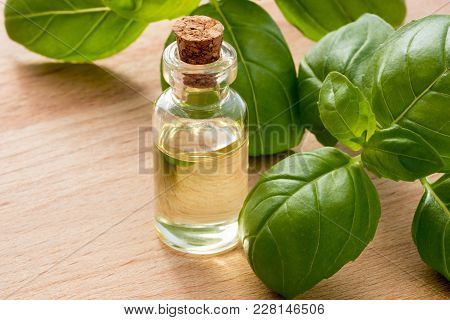 A Bottle Of Basil Essential Oil With Fresh Basil Leaves On A Wooden Table