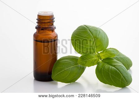 A Bottle Of Basil Essential Oil With Fresh Basil Leaves On A White Background