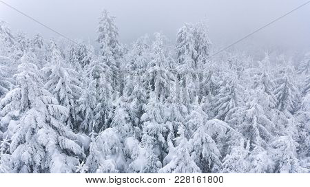 Aerial View Of Snow Covered Forest Covered With Mist. Winter Fairytale.