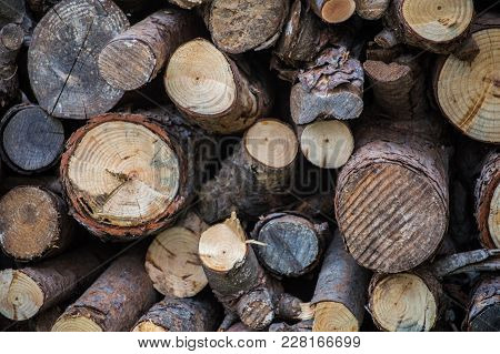 Trunks Of Different Types Of Cut Wood