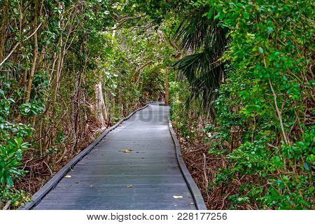 Wooded Trail In Mangrove Forest In Florida