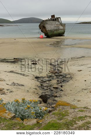 A Sea Cabbage Plant, Lichen And Grass In The Foreground Growing In Fresh Water With The Beach, A Shi
