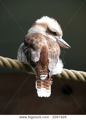 Bird On Rope
