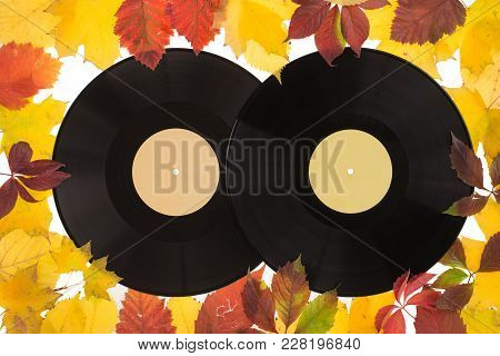 Composition Of Autumn Leaves With The Recording Disk. Leaves And Recording Disk Are On The White Bac