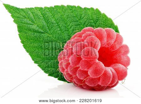 Ripe Red Raspberry Berry Fruit With Green Raspberry Leaf Isolated On White Background