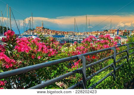 Fantastic Romantic Old Town Of Rovinj With Beautiful Pink Oleander Flowers, Istrian Peninsula, Croat
