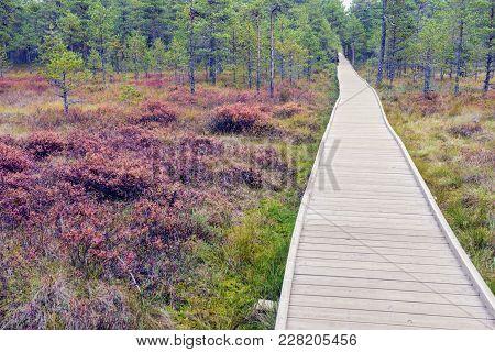Lahemaa National Park In Estonia. Tallinn, Estonia.