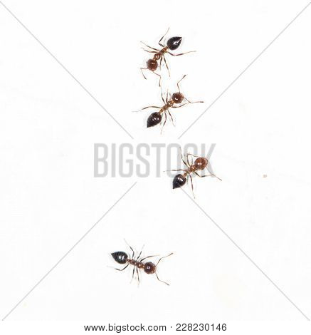 Ants On A White Wall . Photos In The Studio