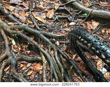 Mountain bike trail showing a path with plenty of tree roots providing a challenge for riders with a bike front tyre.