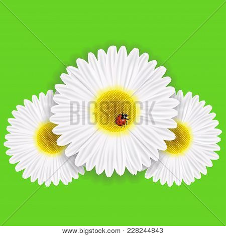 Bright Spring Background Design. Vector Resizable Illustration Eps10. Spring Chamomile With A Ladybu