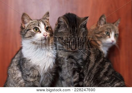 Three Cats Together Indoors Shelter. Lovely Pets
