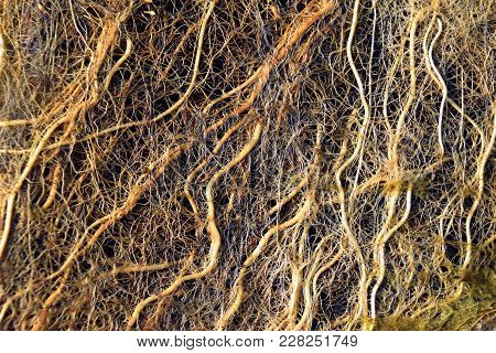 Incredible Vascular Plant Fine Roots Looking Like A Neural Network