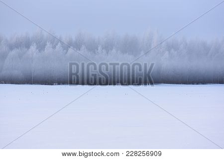 Winter Landscape. Empty Snow Field, Distant Forest In White Haze And Hoarfrost Copyspace