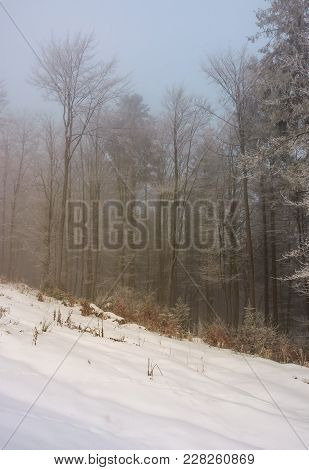 Forest In Hoarfrost At Foggy Sunrise. Lovely Nature Scenery In Winter
