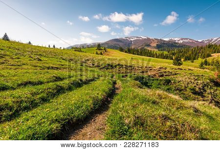 Path Along The Grassy Meadow In To The Mountains. Beautiful Countryside With Spruce Forest In Spring