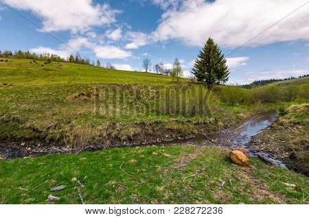Spruce Tree And Log Near The Brook. Nature Scenery With Grassy Hills In Springtime Under The Cloudy