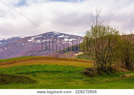Agricultural Field And Small Orchard On Hillside In Springtime. Lovely Rural Scenery In Mountainous