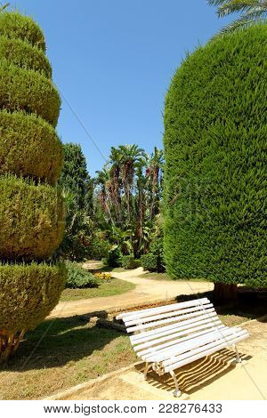 Wooden Bench In Genoves Park, An Exotic Garden Oasis In Cadiz, Andalusia, Spain. It Is Lined With Di