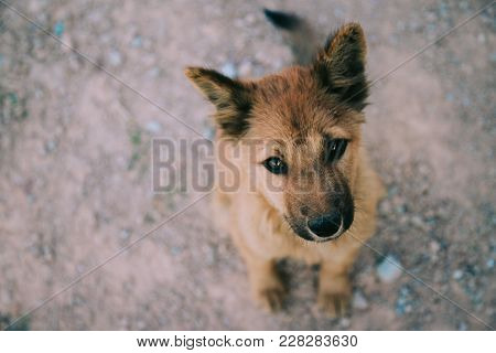 Homeless Dog, Stray Dog, Vagrant Dog Sitting Outside Watching Staring At Camera. The Dog Looking At