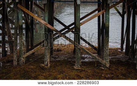 Barnicle Covered Posts Of Dock At Low Tide On Foggy Afternoon