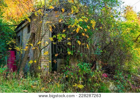 Abandoned Brick Shed Overgrown With Lush Bushes In Arboretum In Sunny Autumn Day, Sochi, Russia
