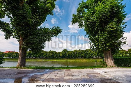 Beautiful Chestnut Alley In Summer. Tall Trees On The Kyiv Embankment Of Uzhgorod Town, Ukraine. Ope