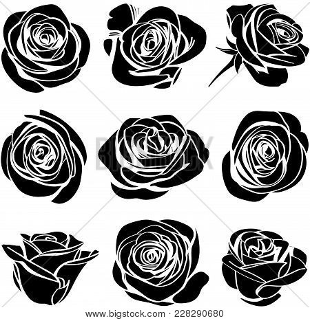 Roses Hand Drawn Set. Black Silhouettes Rose Flowers Inflorescence With White Lines Isolated On Whit