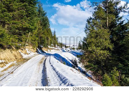 Road Through Spruce Forest In Winter. Lovely Countryside On A Sunny And Frosty Day
