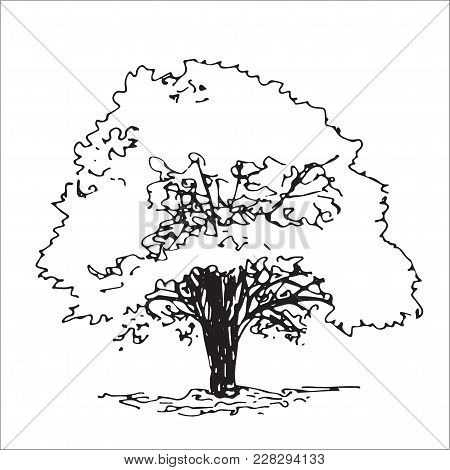 Isolated Tree, Landscape Sketch, Architect Drawing, Black And White
