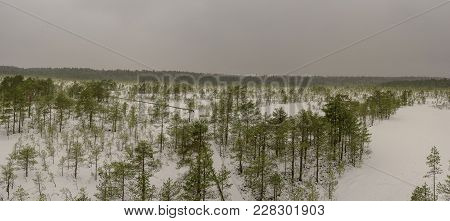 View From Above Of The Snow-covered Bog. Pine Trees With Ice Covered Bog. Viru Bog In Estonia.