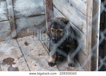 Sad German Sheepdog Puppy Alone In A Cage