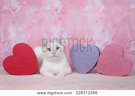 One Tortoiseshell Tortie Tabby Cat Laying On A Pink Blanket Next To A White Kitten With Heterochromi