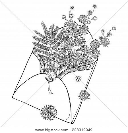 Vector Bouquet With Outline Mimosa Or Acacia Dealbata Or Silver Wattle Flowers And Leaf In Black Ope