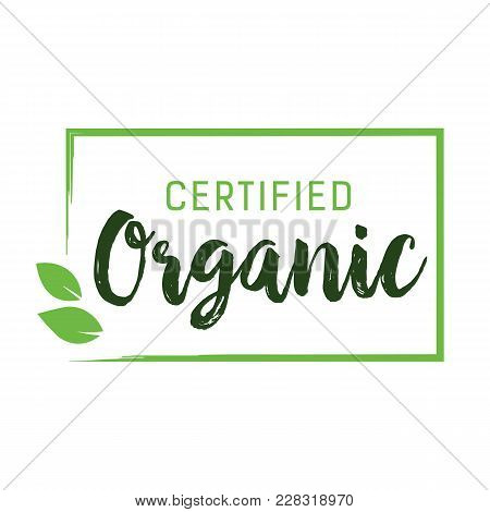 Certified Organic Lettering. Creative Inscription With Green Leaves In Rectangle Frame. Handwritten