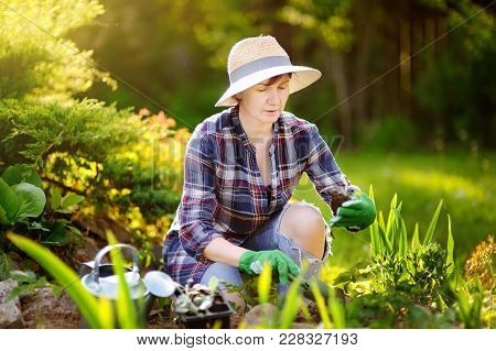Portrait Of Smiling Beautiful Middle Age/mature/older Female Gardener. Woman Planting Seedlings In B