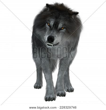 Dire Wolf On White 3d Illustration - The Dire Wolf Was A Prehistoric Carnivore That Lived In North A