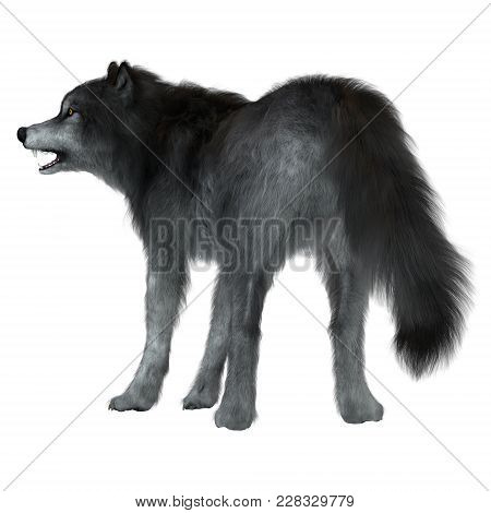 Dire Wolf Tail 3d Illustration - The Dire Wolf Was A Prehistoric Carnivore That Lived In North And S