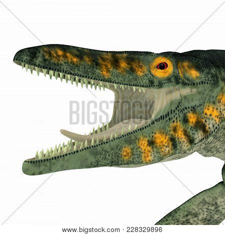 Tylosaurus Marine Reptile Head 3d Illustration - Tylosaurus Was A Carnivorous Marine Reptile That Li