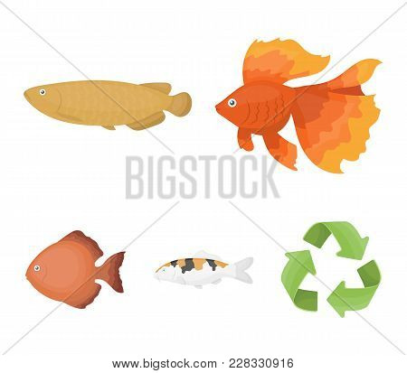 Discus, Gold, Carp, Koi, Scleropages, Fotmosus.fish Set Collection Icons In Cartoon Style Vector Sym