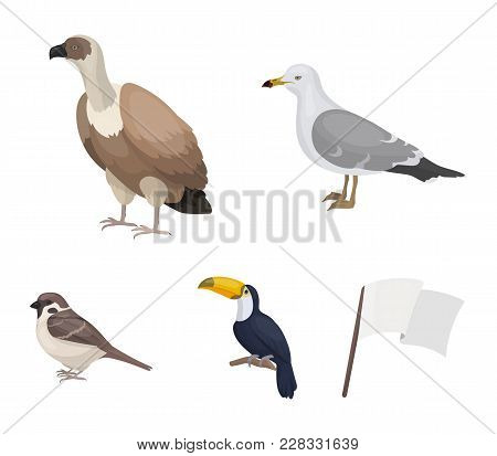 Gull, Toucan And Other Species. Birds Set Collection Icons In Cartoon Style Vector Symbol Stock Illu