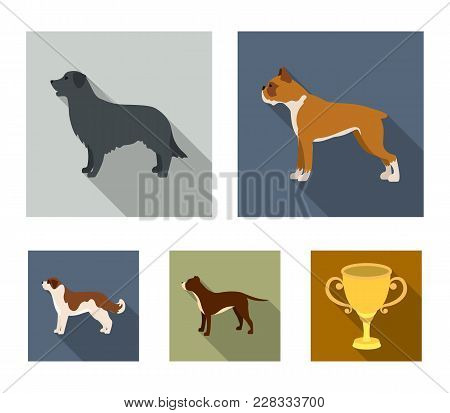 Boxer, Pit Bull, St. Bernard, Retriever.dog Breeds Set Collection Icons In Flat Style Vector Symbol